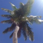 cropped-coconut-tree.jpg